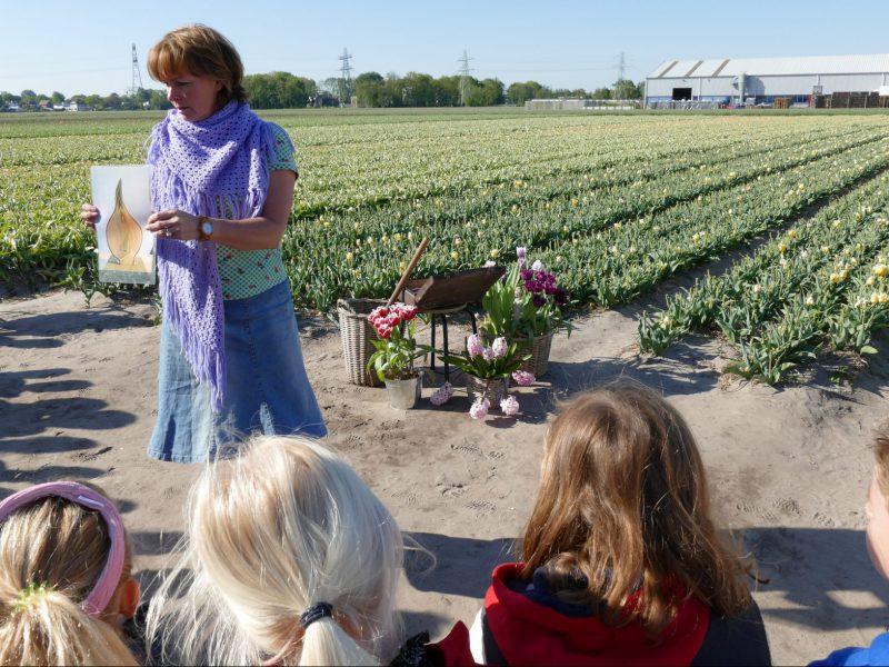 tulpen excursie basisscholen