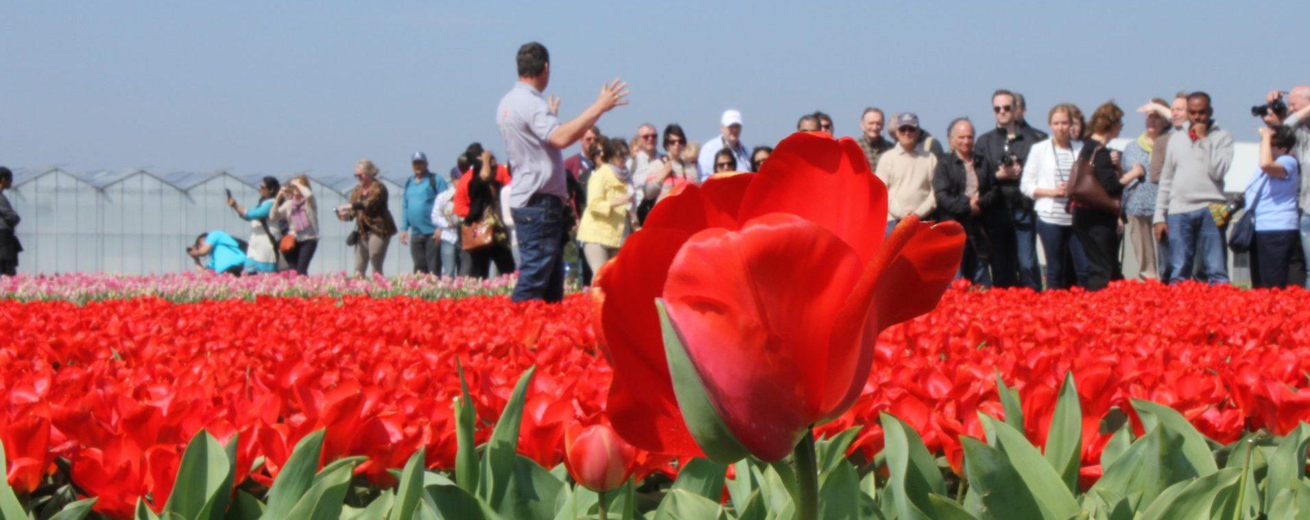 tulpen excursie