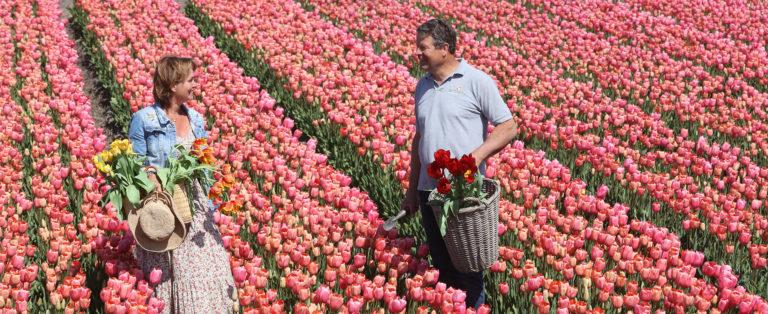Tulips excursion